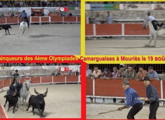 Olive Abrivado et Olympiades - Mouries